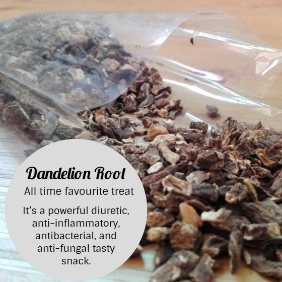 Dandelion Root Snacks